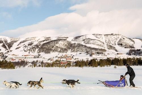 husky sledding why ski in geilo