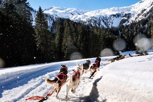 husky sledging Madonna di Campiglio ski resort, Italy