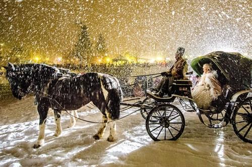 Madonna di Campiglio ski resort-Italy-horse sleigh in the snow