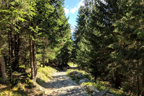 Madonna-di-Campiglio-Italy-wood-walk