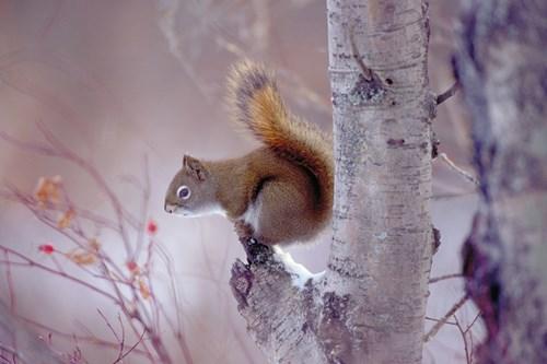 Squirrel-Alberta.jpg