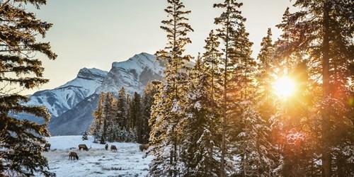tree-sunset-Alberta.jpg