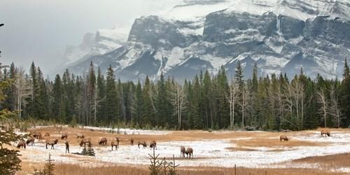 wildlife-Alberta.jpg