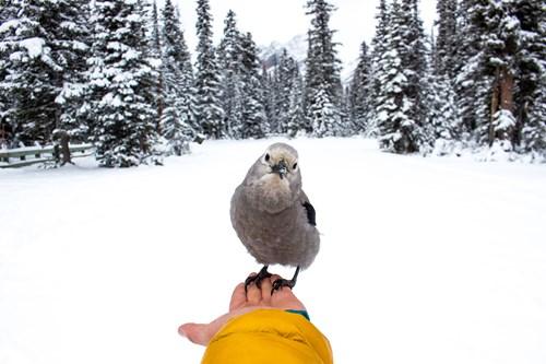 Bird-Alberta.jpg