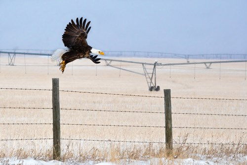 Bird-of-prey-Alberta.jpg