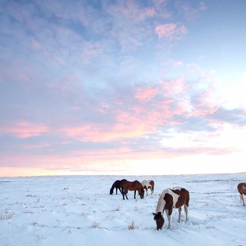 snowscape-Alberta.jpg