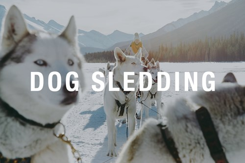 Dog-sledding-overlay-1200x800.jpg