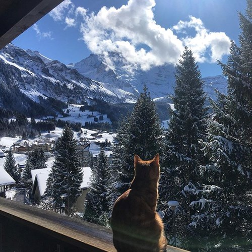 view of zell am see with cat in foreground
