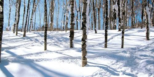 Ski through the trees in Rusutsu Ski Resort, Japan