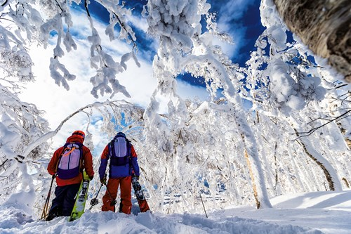 Skiing in Japan, which resort is best, Skiers in the snowy trees, Rusutsu