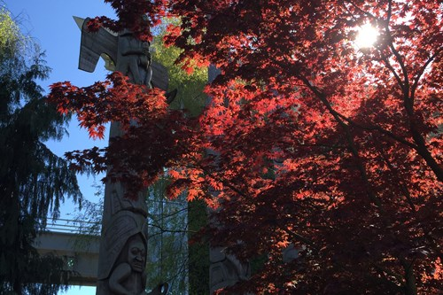 Vancouver-Canada-red-trees
