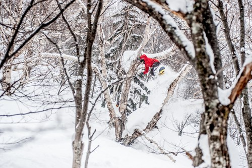 tree skiing in kiroro, off-piste powder skiing japan