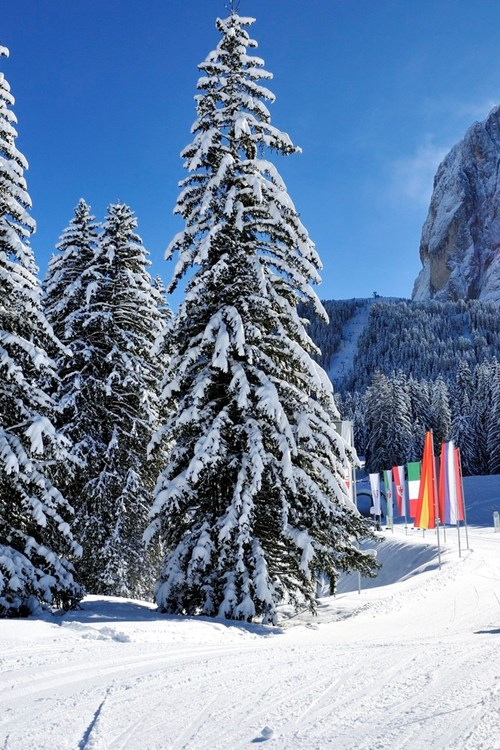 Skiing in Selva Val Gardena, snowy trees and mountain views