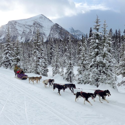 dogsled-great-divide-trail-moment-banff-alberta.jpg
