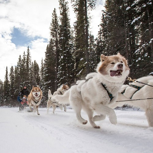 dogsled-hero-banff-alberta.jpeg