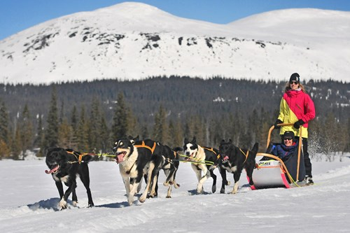 trysil-dog-sledding