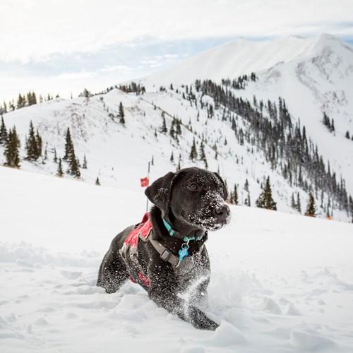 Aspen Snowmass rescue dog