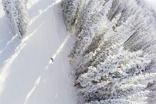 quiet slopes skier and trees