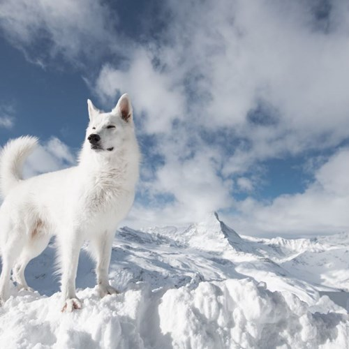 Tweet from Sylvia Michel @zermatt_tourism 9th Jan 7am