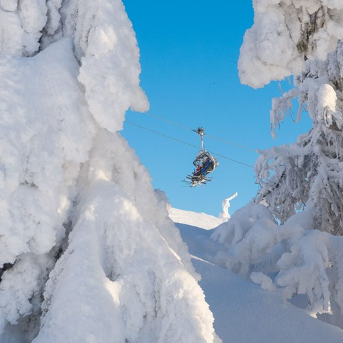 snow covered trees in Trysil
