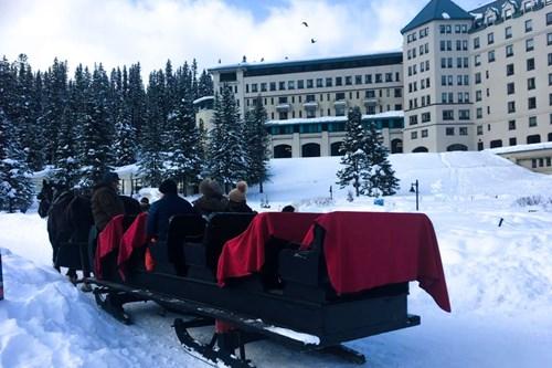 Horse sleigh, lake louise, alberta